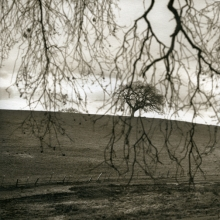 Veiled Oak