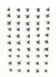 50 Flies