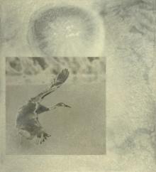 Crescent Crane